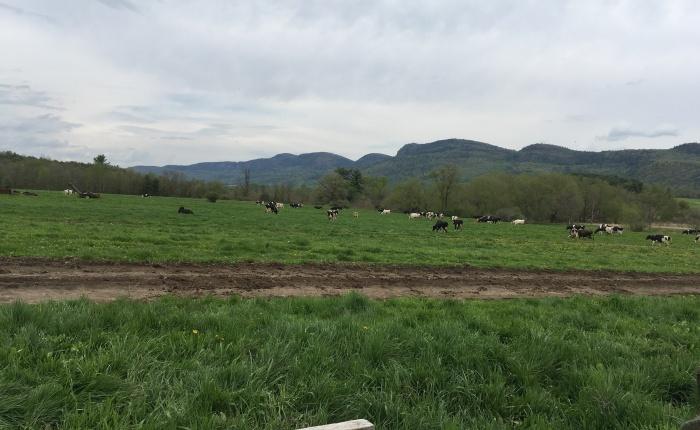 Forever Farmland
